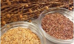 Полезные свойства семян льна, рецепты